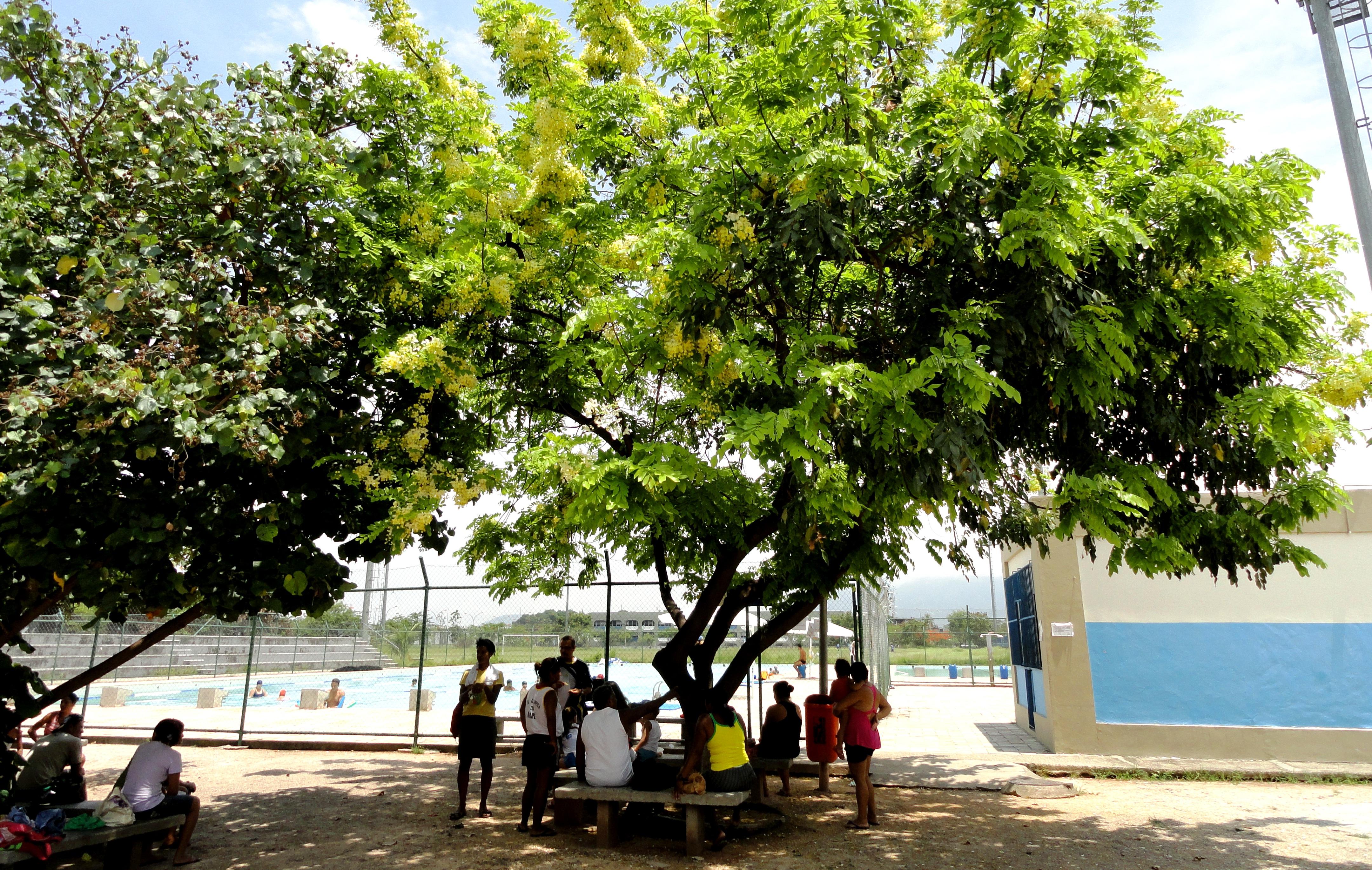 C:\Users\Jose Fantini\Pictures\A Mare\Arvores e outras\Ipes e outras\Árvores - Ipê (22-09-09)\DSC01016 livreto.jpg